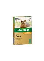 advantage cat up to 4kg 6pack